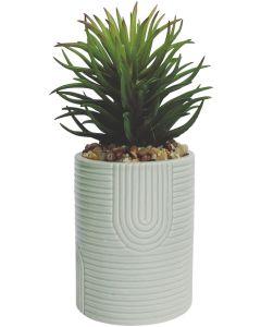 Rainbow Planter w Succulent Mint  Sm 15c