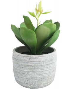 Succulent Potted Green Sm 15cm